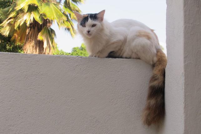 De bônus, vai esse gato lindo que tava lá no muro paquerando com a gente ;)